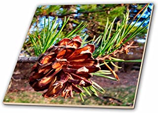 3dRose ct_3571_2 Pine Cone Ceramic Tile, 6