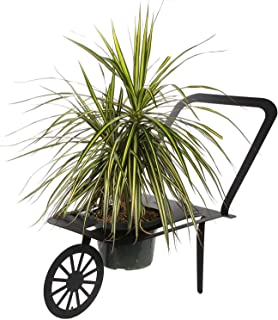 Lily's Home Mini Wheelbarrow Metal Yard Art, Flower Pot Planter Stand, Ideal for Home, Garden, Patio - Great Gift for Plant Lovers, Housewarming, Mother's Day (Black)