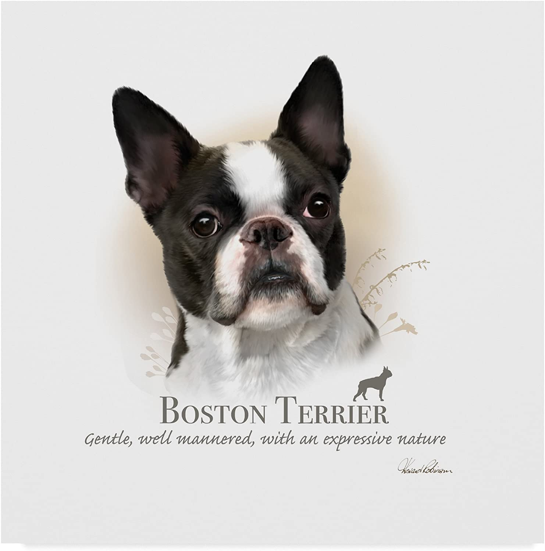 Boston Terrier by Howard Robinson, 14x14-Inch