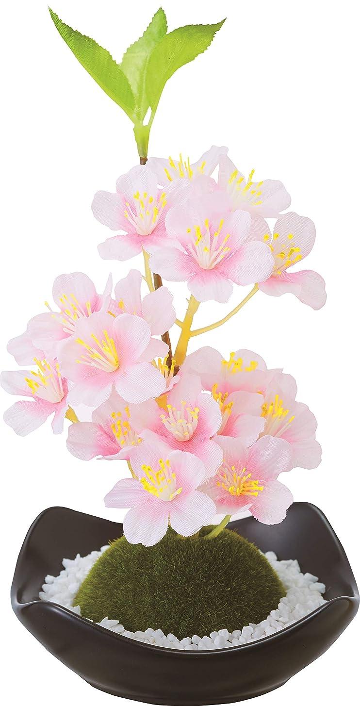 切り下げ困難重さカメヤマキャンドルハウス 苔玉フレグランス 桜