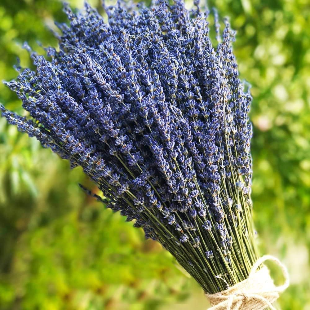 TooGet Lavender Dried Ultra Blue Bundles 200+ Stems (16
