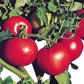 Tomato Jet Star - Untreated Seeds - 100 Seeds