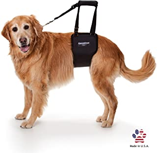 GingerLead Dog Support & Rehabilitation Harnesses - Padded Lifting Sling with Integrated Leash - No Bunching - Made in USA