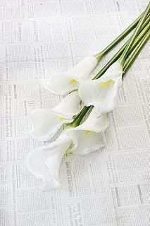 Best navy blue calla lilies Reviews