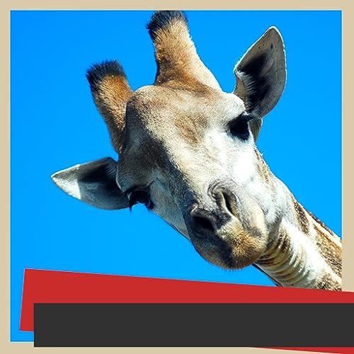 Giraffe Bilderrahmen