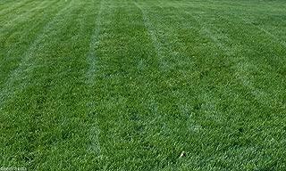 Titan Rx Turf Type Tall Fescue Grass Seed - 10 Lb.