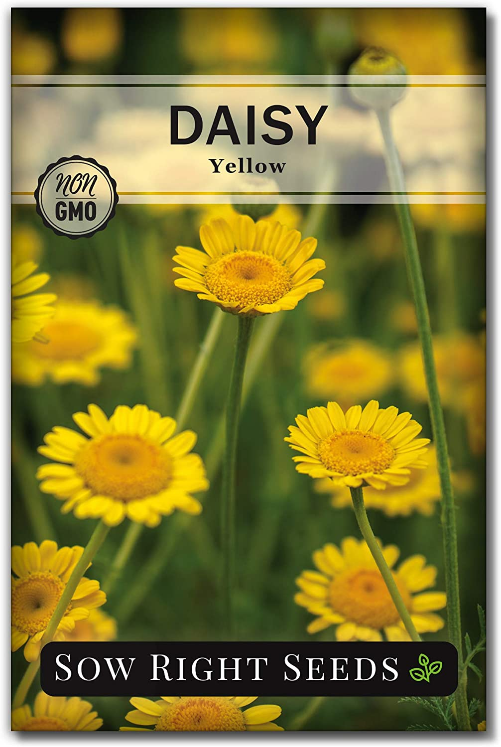 Over item handling Trust Sow Right Seeds - Yellow Beauti Planting for Daisy Flower