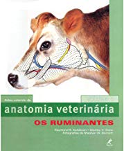 Anatomia veterinária: Os Ruminantes