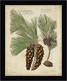 Antique Conifers II by Henry Fletcher 28