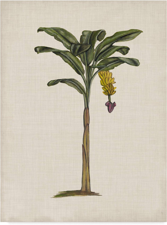 Trademark Fine Art British Palms III by Naomi McCavitt, 14x19