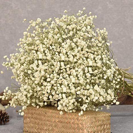 Amazon.com: MLSG 150g Natural Dried Gypsophila Flower Bouquet Baby's Breath  Bunch Forever Flower Decorative Dried Blooms Home Décor, Gift (White) :  Home & Kitchen