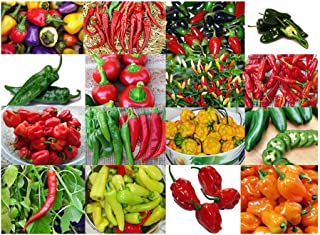Please Read! This is A Mix!!! 30+ ORGANICALLY Grown Hot Pepper Mix Seeds, 16 Varieties Heirloom Non-GMO Habanero, Tabasco, Jalapeno, Yellow and Red Scotch Bonnet, Ships from USA! US Grown.