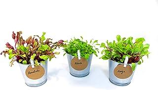comprar comparacion Green Up! Kit de Plantas Hojas Baby–Kit de Cultivo de Hojas para Ensalada Interior para Huerto Urbano–Cultiva tus propias ...