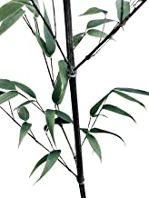 Best black clumping bamboo for sale Reviews