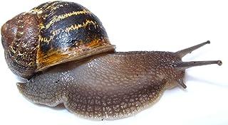 The Garden Snail House Kit