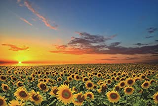 Funnybox Sunflowers in The Fields at Sunset-Wooden Jigsaw Puzzles 1000 Piece for Teens and Family