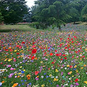 100% Wild Flower Seed Mix Annual Meadow Plants Attracts Bees & Butterfly