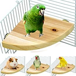 Best bird accessories for cages