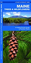 Maine Trees & Wildflowers: A Folding Pocket Guide to Familiar Plants (Wildlife and Nature Identification)