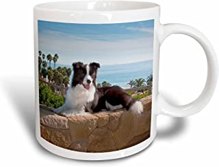 3dRose 88790_1 A Border Collie dog-US05 ZMU0102-Zandria Muench Beraldo Ceramic mug, 11 oz, White