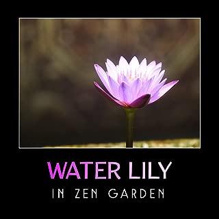 Water Lily in Zen Garden – Beautiful & Gentle Chinese Music