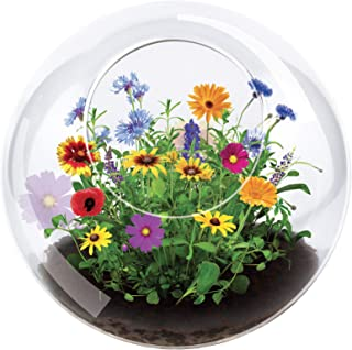 Unique Gardener Grow Your Own Wild Flower Terrarium - Blooms in One Month - Just Add Water and Sprout Some Beautiful Flowers - Great for The Office Or Home