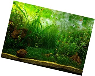 Sharplace Fondo Vivo Del Acuario, Adhesivo Póster Fish Tank Wall Decor Sticker - Algas marinas