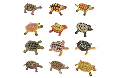 Best toys for turtles