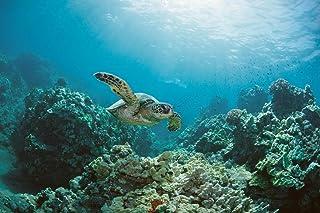 Sea Turtle Swimming Near Coral Reef Photo Photograph Cool Wall Decor Art Print Poster 36x24