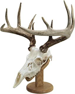 Best fake deer skull for european mount Reviews