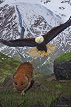 Alaska Soaring Bald Eagle Hunting Rodent by Vincent HIE Nature Art Print Laminated Dry Erase Sign Poster 12x18