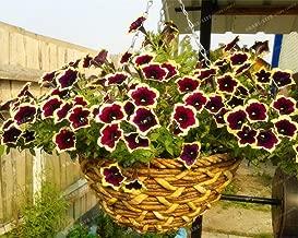200 Seeds Cascadia Rim Magenta Petunia seeds Dark Purple Blooms With Cream Edge Flower Seeds #32796834587ST