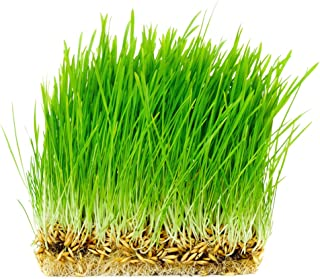 Thunder Acres Non GMO, Certified Organic, Oat Seed