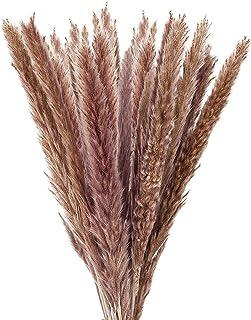 EWIGE Getrocknetes Pampasgras, 20 Stück Trockenblumen Deko für Hause Wohnzimmer Schlafzimmer Hochzeit 55cm (Naturbraun)