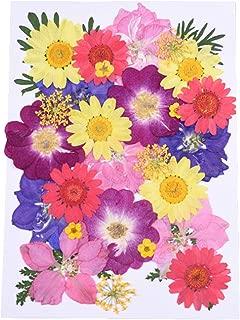 HANDI-KAFU Surtido de flores prensadas secas reales rosa Larkspur azul hortensia y margaritas coloridas