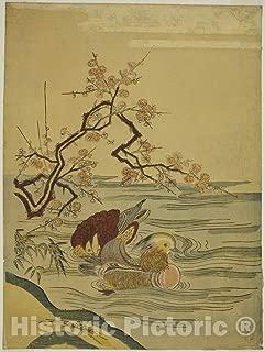 Historic Pictoric Print : Mandarin Ducks Swimming Under Plum Branch, Isoda Koryusai, c 1770, Vintage Wall Decor : 36in x 48in