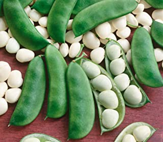 Henderson Lima Beans,100+ Premium Heirloom Seeds, Fantastic & Must Have for Home Garden!, (Isla's Garden Seeds), Non GMO Organic, Highest Quality Seeds, 90% Germination Rates, 100% Pure