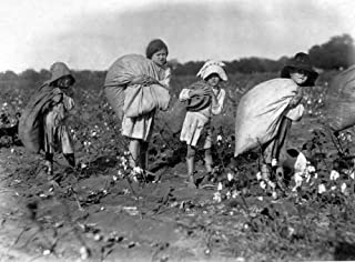 Child Labor C1910 Na Group Of Young Cotton Pickers In The American South Photographed C1910 By Lewis W Hine Poster Print by (18 x 24)