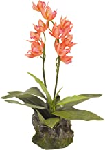 Lucky Reptile IF-15 Upright Orchid, 35 cm, Red