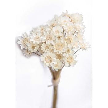 Amazon Com Tooget Fragrant Peony Ball Paeonia Lactiflora Natural Dried Peony Flowers Wholesale Top Grade 4 Oz Furniture Decor