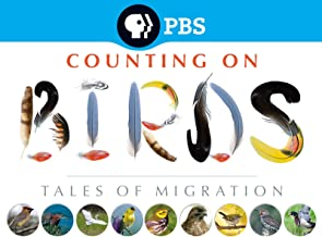 Counting on Birds: Tales of Migration