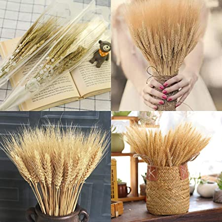 VISION CRAFTED Artificial Dried Wheat Sheaves (Gold, 100 Pcs)