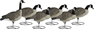 Best dakota decoys goose Reviews