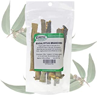 Eucalyptus Branches (2.29 oz.) - Healthy Natural Chewing Sap Treat - Native Sugar Glider Food - 100% Natural Eucalyptus Wood Branches