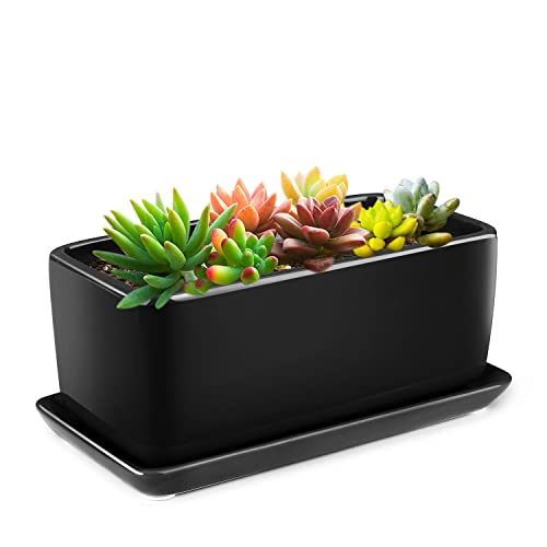 Tabletop Planters Amazon Com