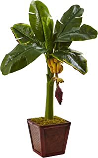 Best banana tree in planter Reviews