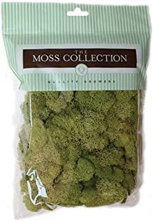 Quality Growers QG2060 Preserved Reindeer Moss, 108.5 Cubic Inch, Spring Green