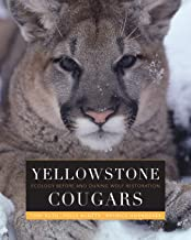 Yellowstone Cougars: Ecology before and during Wolf Restoration