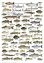 Heritage Fish of The Great Lakes Region Jigsaw Puzzle - 550 Pieces