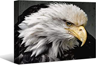 Laoife,Animal Photo Painting of The Eagle Picture Prints on Canvas, Modern Wall Art..